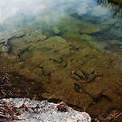 Dinosaur Tracks in the Paluxy River by Lisa Holmgreen
