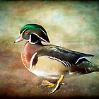 Handsome Fella - Wood Duck by KBritt