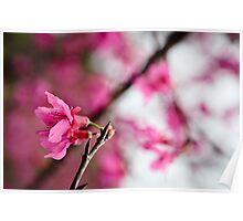 Couleur du printemps Poster