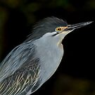 Green Heron by neil harrison