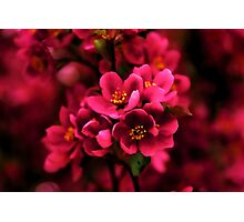 Dark Spring Dreams Photographic Print