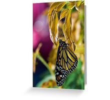 pending monarch Greeting Card