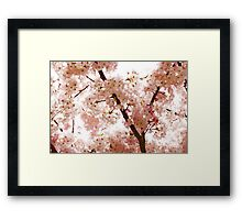 Pink Cherry Blossoms - Impressions Of Spring Framed Print