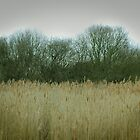 Tree reed line by swandundee