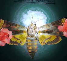 Death Moth Floral by Mekenzie Price
