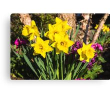 Sunny Daffodil Bouquet – Impressions Of Spring Canvas Print