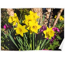 Sunny Daffodil Bouquet – Impressions Of Spring Poster