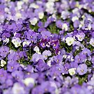 Purple Rain by Barham Ferguson