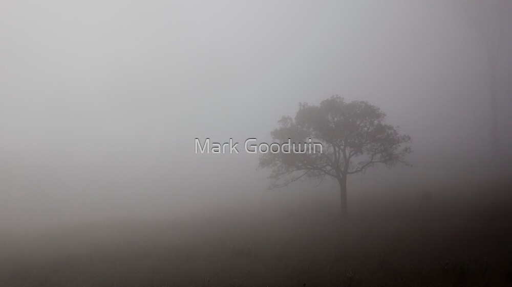 Morning Fog by Mark Goodwin