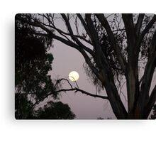 April Moon Canvas Print