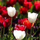 Floral Wines by Barham Ferguson