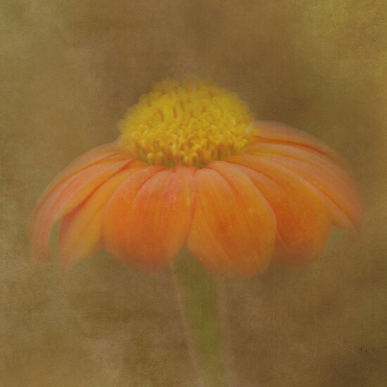 Flower with a Texture by Catherine Hamilton-Veal  ©