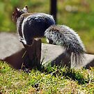 Leaping Squirrel by Bine