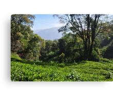 Tea Garden Canvas Print