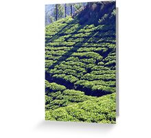Tea Garden Greeting Card