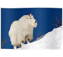 Mountain Goat On Blue Poster
