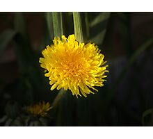 Jubilee Gold Photographic Print