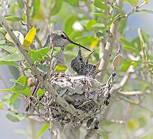 Another Hummer Family  by Judy Grant