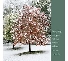 Snowy Maple Tree With Buddha Quote Photographic Print