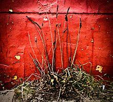 Barren Plant Against Red Wall by JelmervNuss