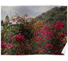 Nature Along The River Cuale - Naturaleza Al Lade Del Rio Cuale Poster