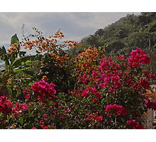 Nature Along The River Cuale - Naturaleza Al Lade Del Rio Cuale Photographic Print
