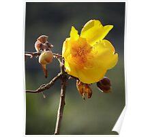 Dandelion - Botón De Oro Poster