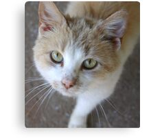 Buttercup - Animal Photography Canvas Print