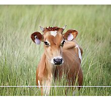 Cute Cow! Photographic Print