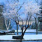 Winter  by Brenda Dahl