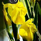 Yellow Irises iphone case by vigor