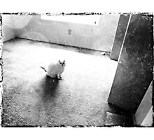 A room all to herself Photographic Print