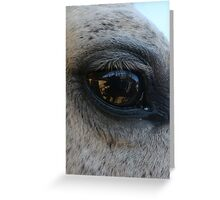 Eye of the Horse - Animal Photography Greeting Card
