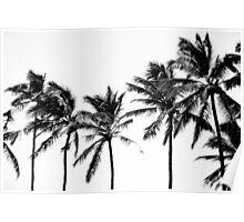 BW Palms Poster
