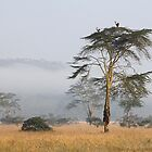 Morning Ritual in the Fog. Lake Nakuru, Kenya. by Carole-Anne