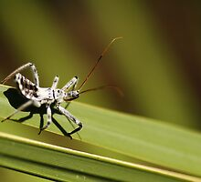 Bug on Blade of Grass by mhm710