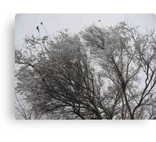 Snow-tipped Canvas Print