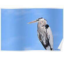 Blue Heron & Blue Sky Poster