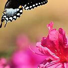 Spicebush & The Azaleas by Jeff Ore