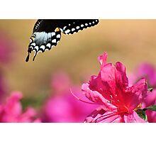 Spicebush & The Azaleas Photographic Print