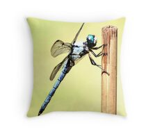 Skeeter  Hawk Throw Pillow