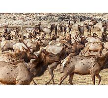 Elk on the Move Photographic Print