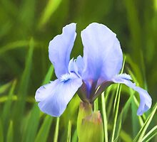Pale Purple Iris - Impressions Of Spring by Georgia Mizuleva