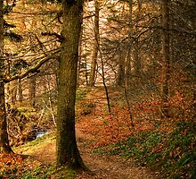 The Path Through the Woods by Christine Smith
