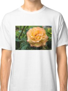 Early Summer Blooms Impressions - Elegant Peach Rose Classic T-Shirt