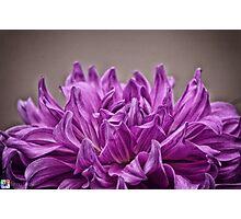 The Purple Crown Photographic Print