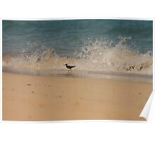 Bird in the Waves Poster