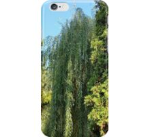 willow and two fir trees iPhone Case/Skin