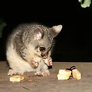 Orphan possum by Denzil