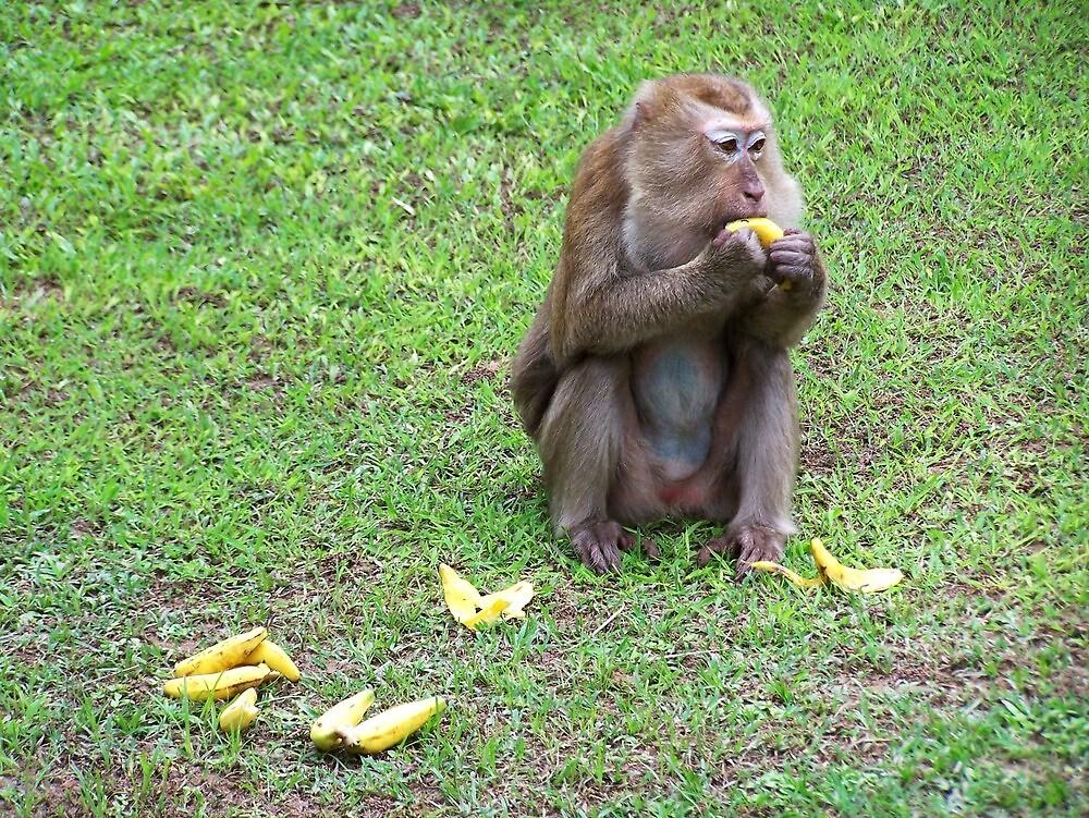 Hungry Monkey by jlv-